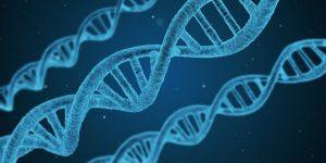 Image de chaines ADN